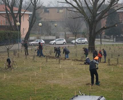 """● 12 e 19 febbraio 2017 – """"Riforestazione"""" di via Zandonai"""