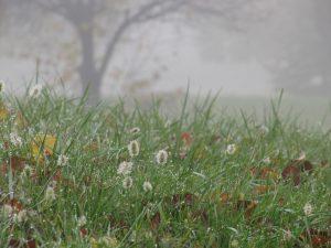 fiori nella nebbia