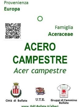"""● 24/06/2020: Restyling dei """"cartellini"""" degli Alberi del Parco Centrale"""