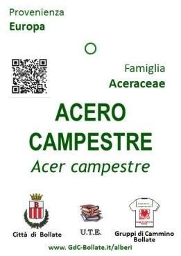 """● 24/06/20 – Restyling dei """"cartellini"""" degli Alberi del Parco Centrale"""